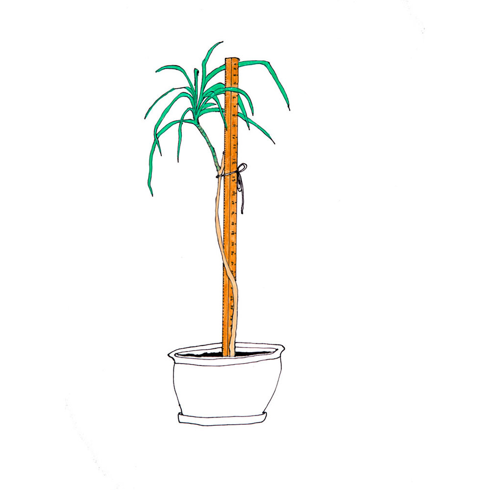 <i>Significant Object <br>(plant)</i>