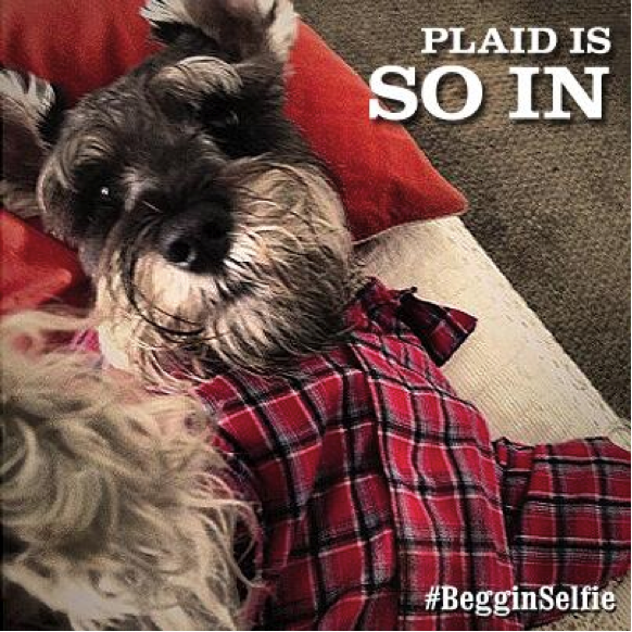 Photo Credit: @Beggin