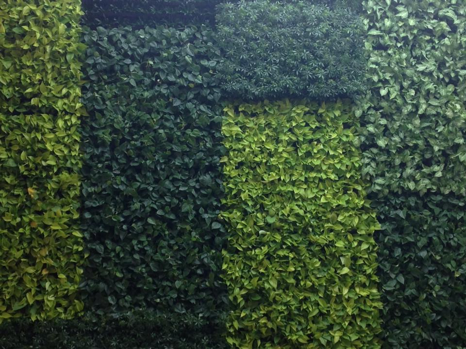 Living Greenery Wall