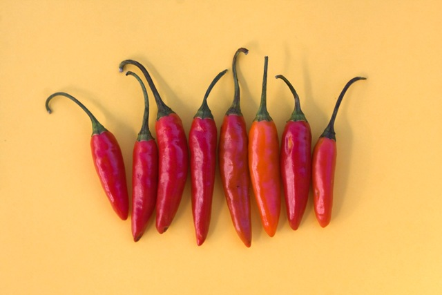 """"""" Hot Hot Hot """" by  Nina Matthews Photography  is licensed under  CC BY 2.0"""