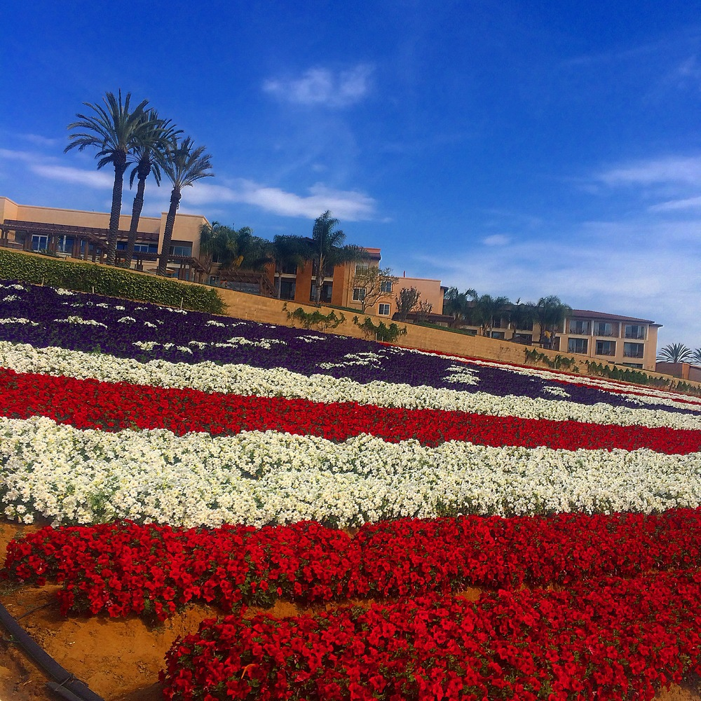 Patriotic florals at the Flower Fields, next to the Carlsbad Premium Outlets.