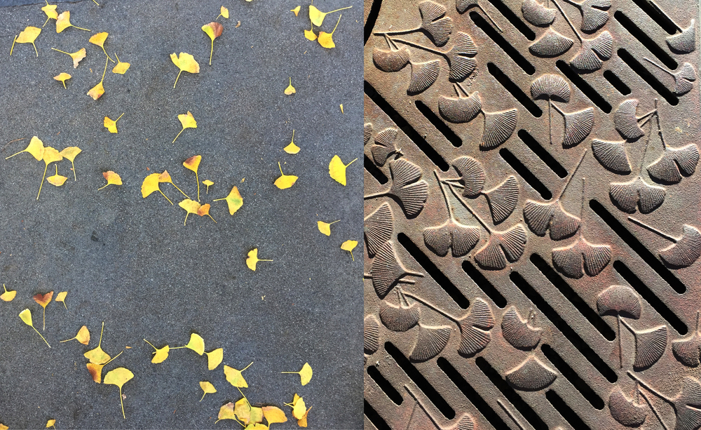 Ginko leaves