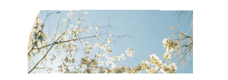 logo_fisheye2.png