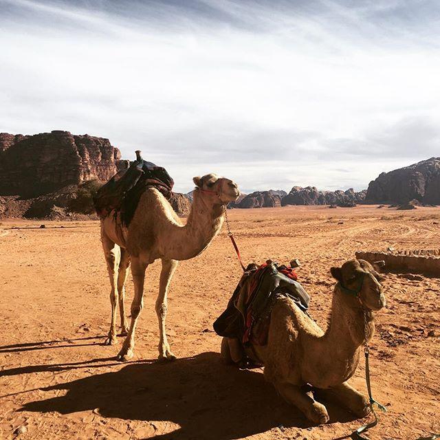 Wadi Rum, Jordan. #offthehook #jordantravel #cameltime
