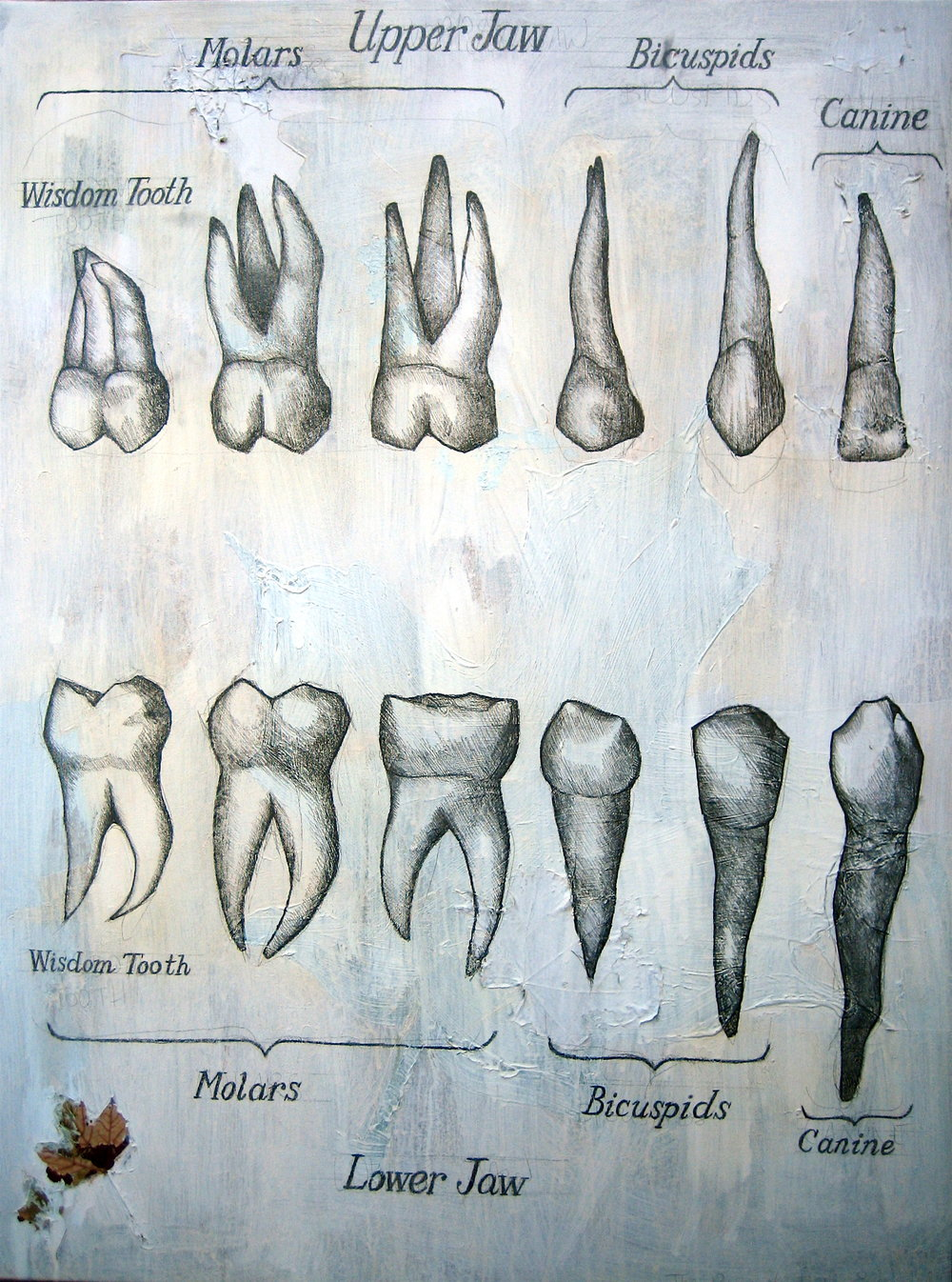 The Adult Teeth