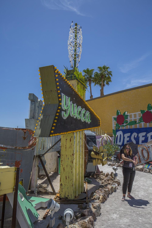 10_Yucca.jpg