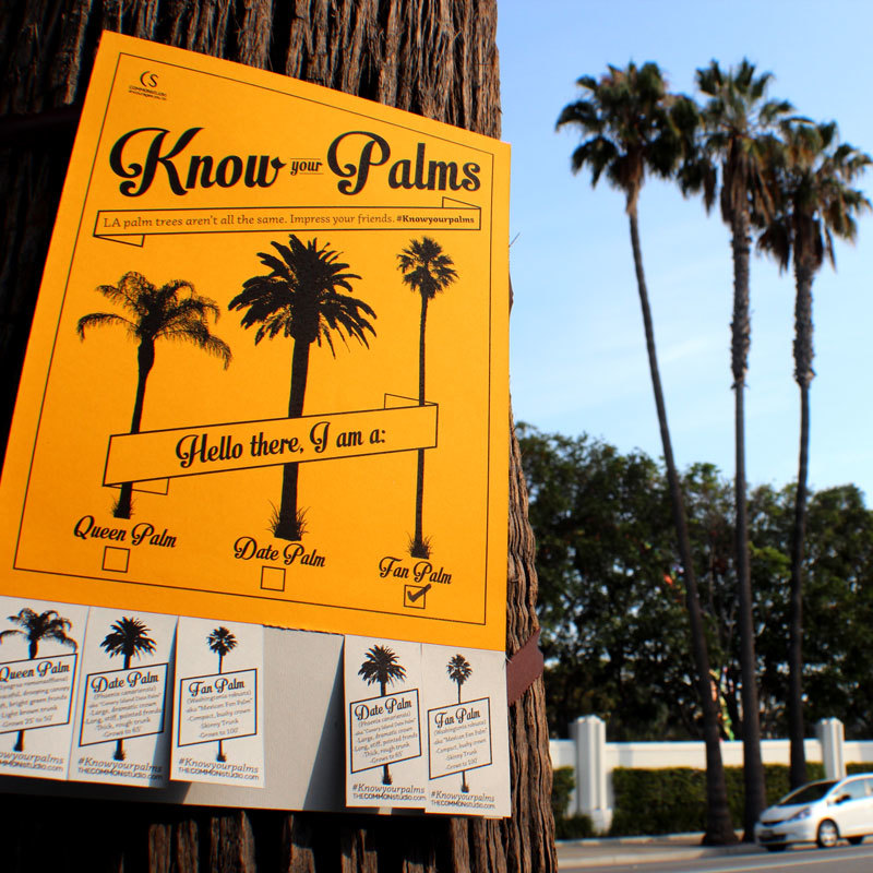 Know Your Palms   Encouraging Angelenos to take a closer look at their iconic flora.