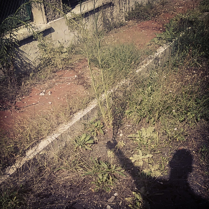 IMG_20141007_165833.jpg