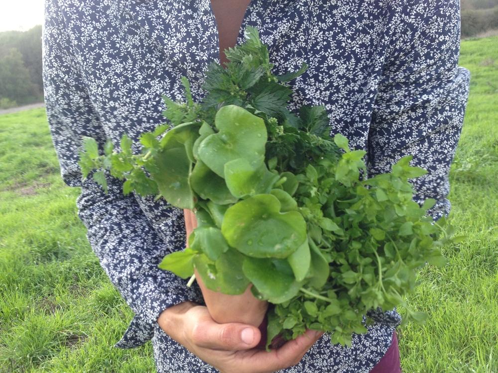 Wild Herbs.png