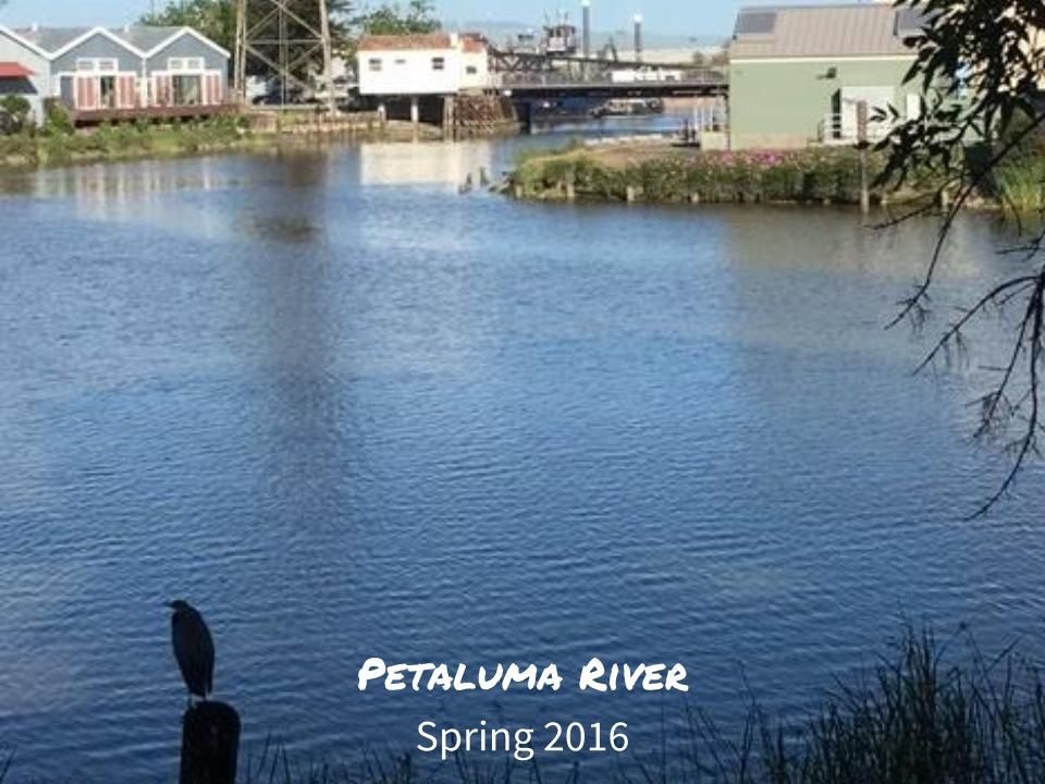 Petaluma Watershed Classroom Presentation (12).jpg