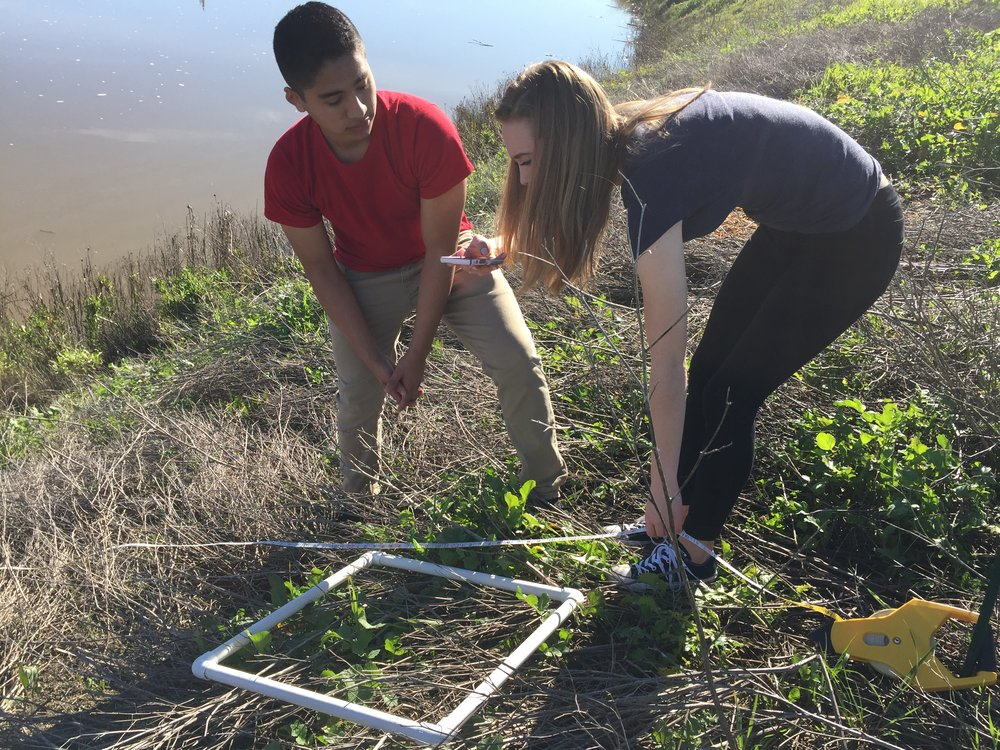 Petaluma High Students from Linda Judah's  Interactions in Our Watershed  project survey the banks of the McNear peninsula in Steamer Landing Park.