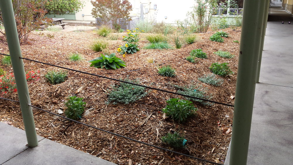 The garden built and tended by students of Crossroads Community Day School.