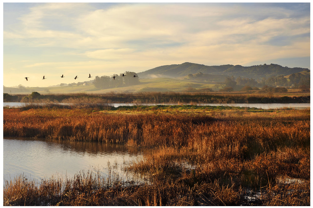 The Petaluma Marsh, photo by Scott Hess