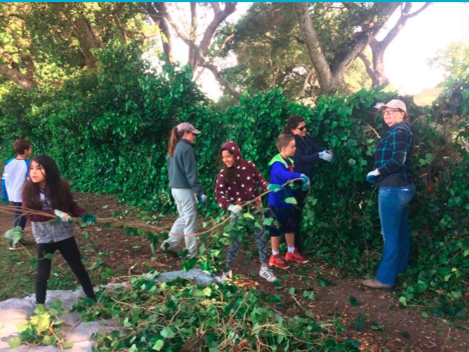 McNear 4th Graders work with STRAW and Friends of the Petaluma River to clear out invasive ivy.