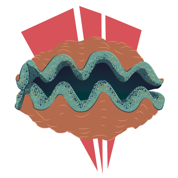 clam-01.jpg