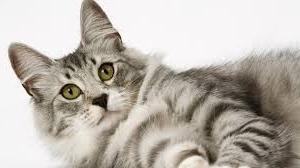 mozart cat (1).jpg