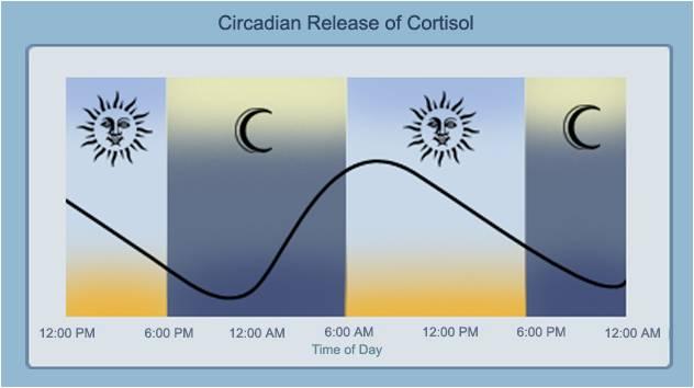 Cortisol-Rhythm.jpg