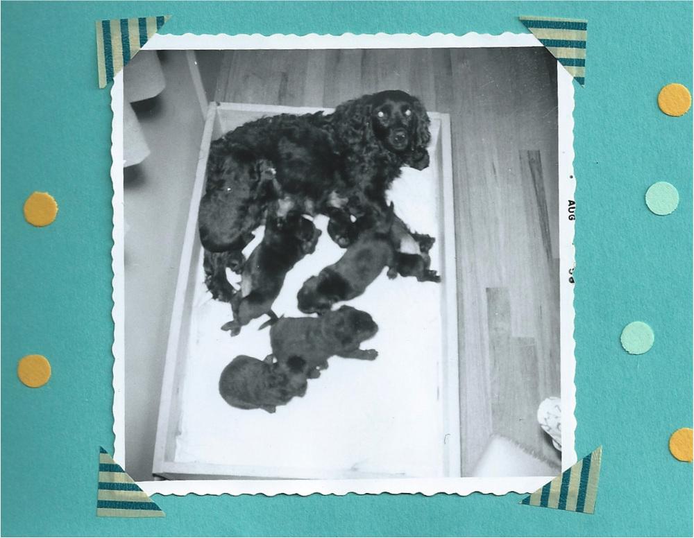 poodles1.jpg