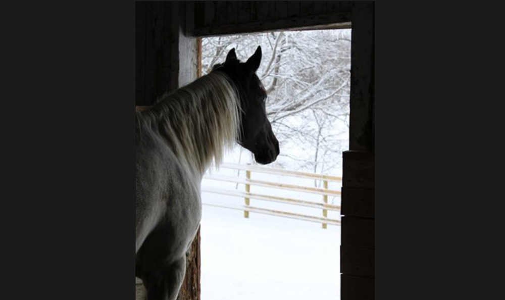 Barns in Winter, 1st Place - Jennifer Swanson