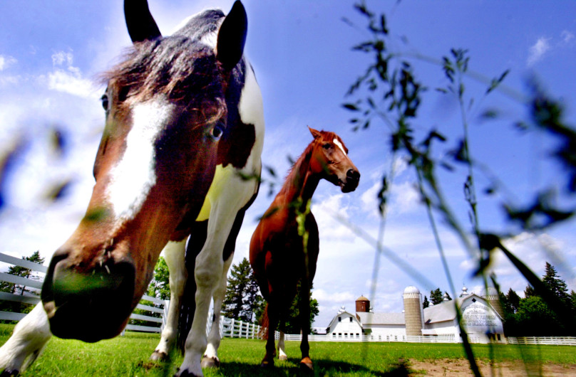 Horses graze by the Schiltgen Farm in Lake Elmo, in this 2002 photo. The City Council has rejected a proposal to operate a horse-boarding business in the barn, which the owners say is necessary to make money to maintain the barn. - Photo by Craig Borck http://www.twincities.com/2017/10/30/bye-bye-barn-owners-say-lake-elmo-vote-endangers-historic-landmark/