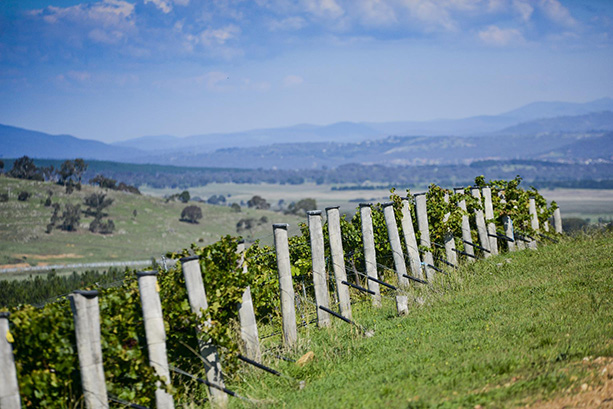 Mount Majura Canberra Hills.jpg