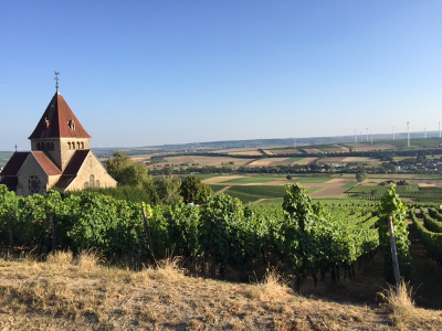 Gau-Bickleheim in the Rheinhessen, ready for vintage 2016