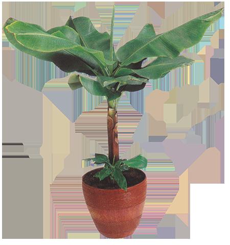 left plant.png