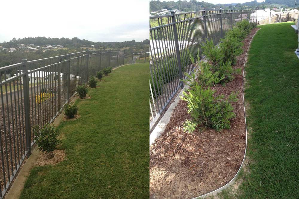 Before & After.  We removed the existing lilly pilly shrubs and surrounding grass then created a mulched bed with long lasting aluminium edging into which we planted the native Callistemon 'Slim.'