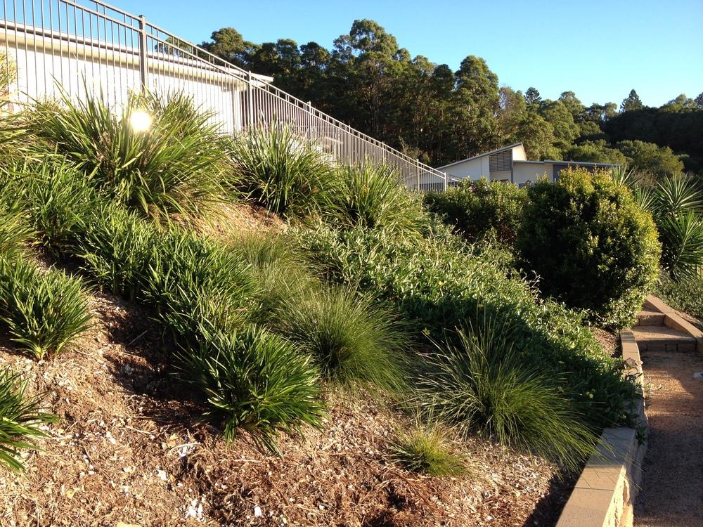 Australian Native Grasses & Strappy Leaved Plants