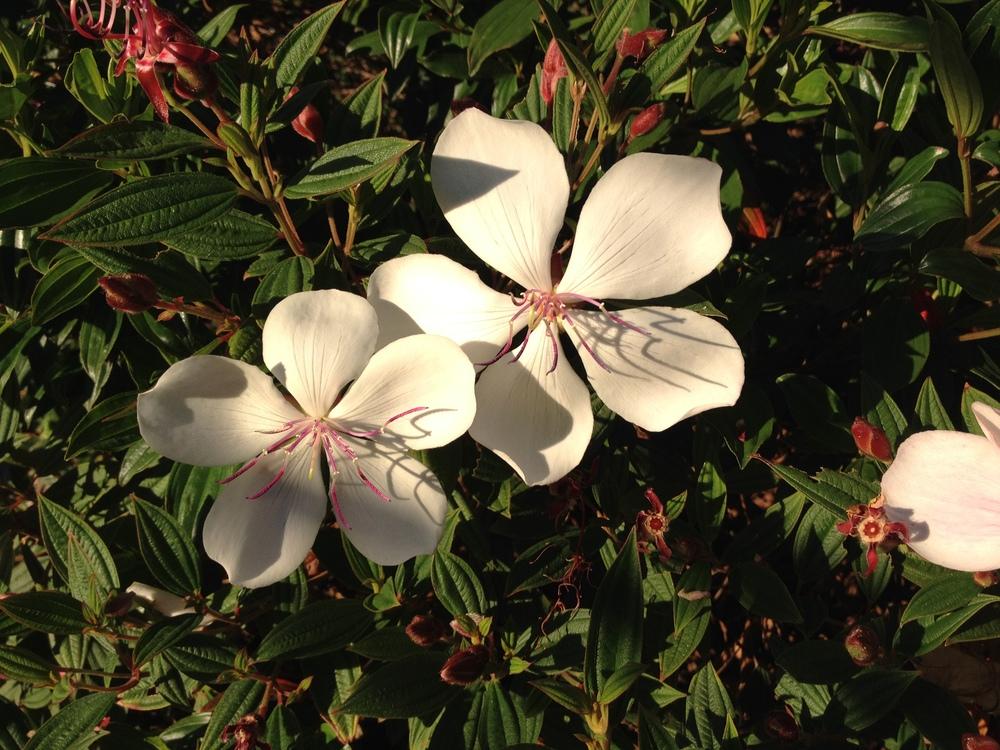 Beautiful Flowering Shrubs
