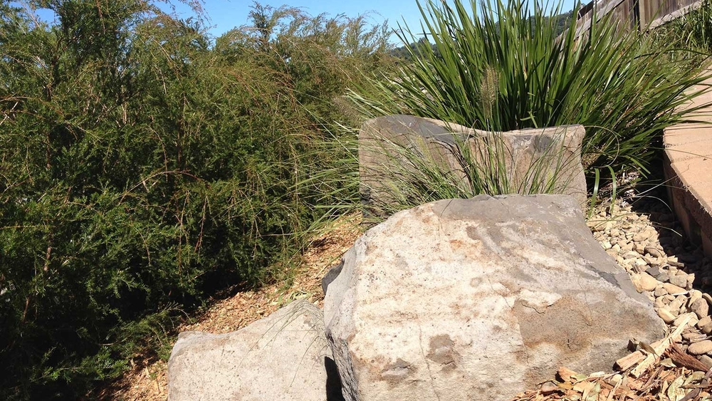 Sunshine coast organic landscape garden design for Landscape design sunshine coast