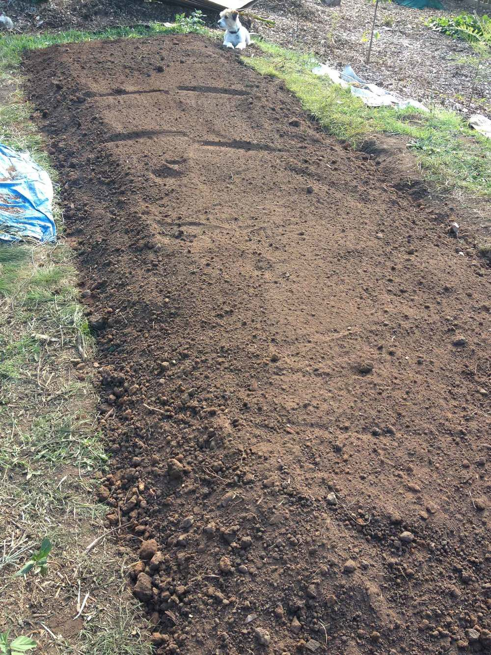 Biointensive garden bed prepared using the double digging method.