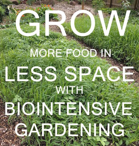 Grow More Food In Less Space With Biointensive Gardening U2014 Sunshine Coast  Organic Landscape Design U0026 Garden Design