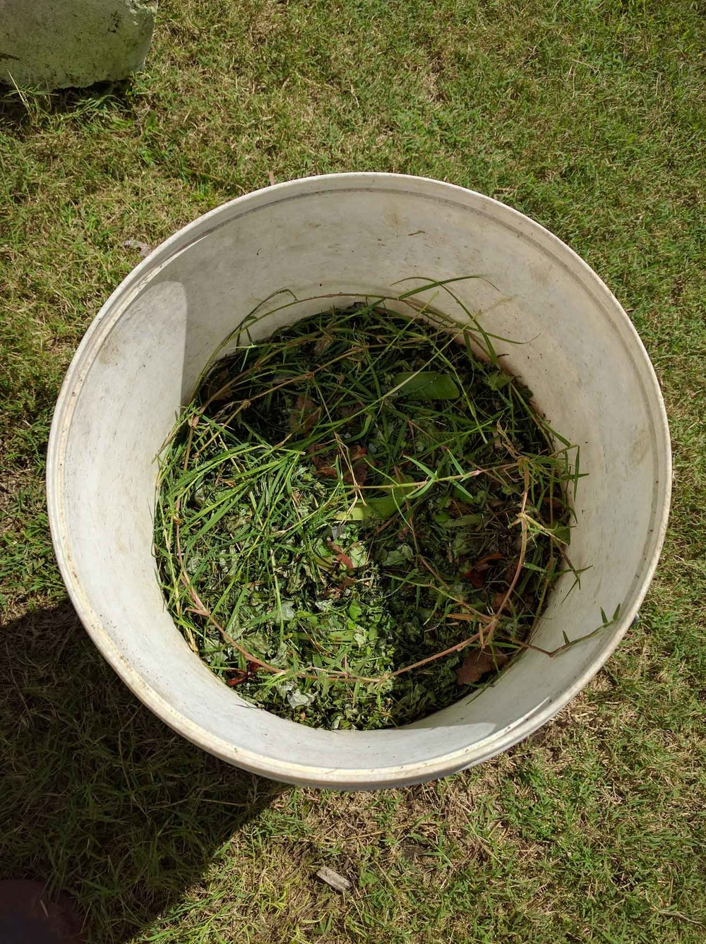 Bucket with clippings.