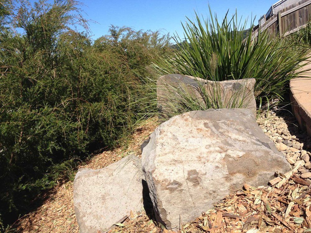 Boulders and Native Australian Plants.jpg