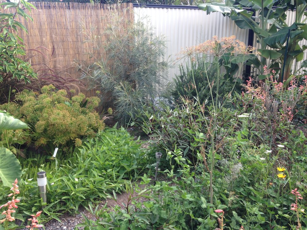 Edible Garden Australian Native Plants.JPG