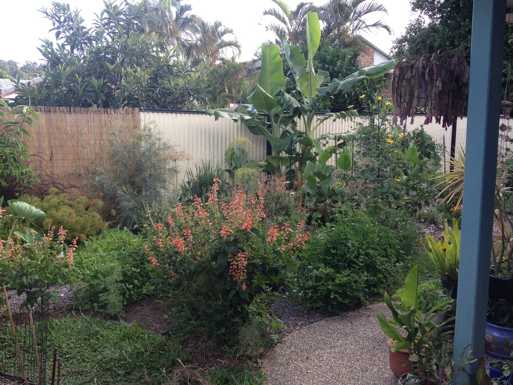 Carolyns edible garden wide view.JPG