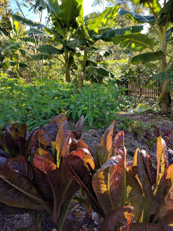 Regenerative Designs Australia Research Garden