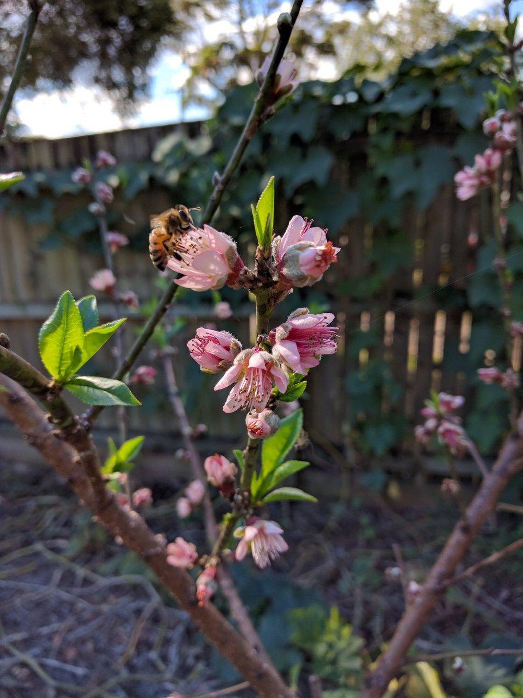 Peach Blossom Organic Garden Design Consulting.jpg