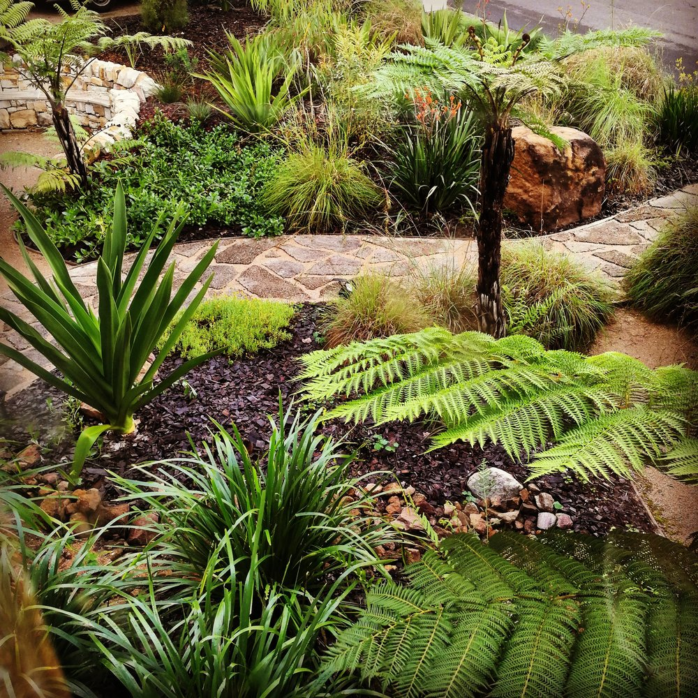 Australian Native Garden Design.jpg