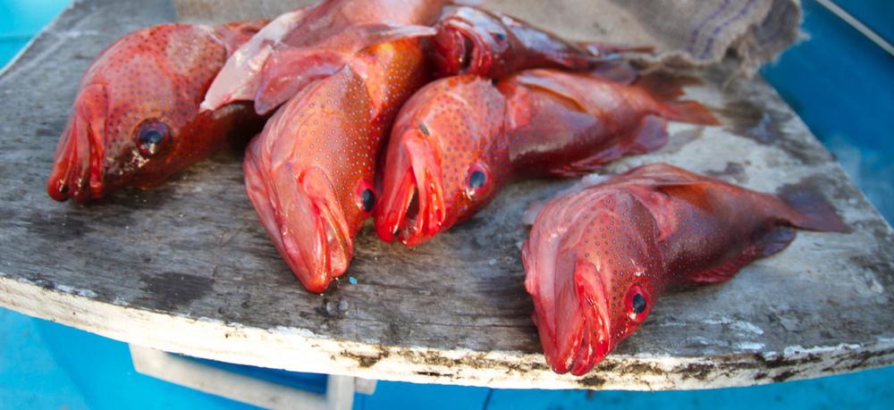Fish Fillet.jpg