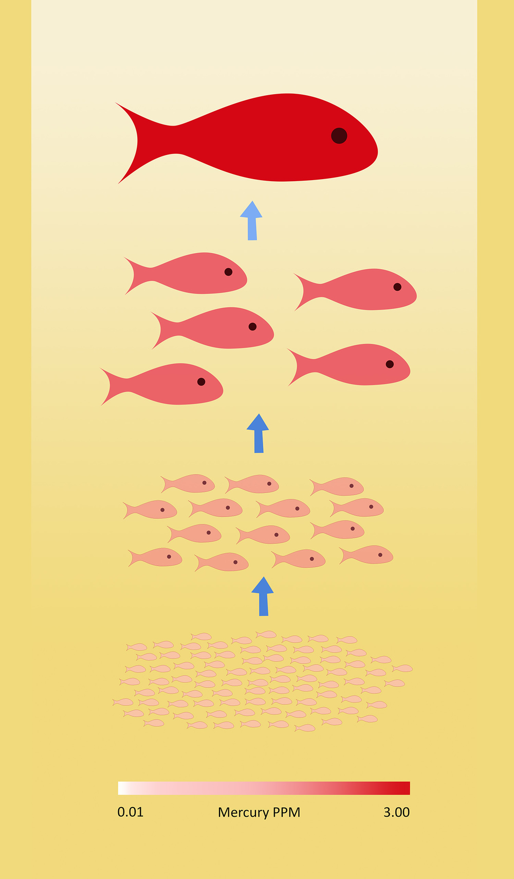 Bioaccumulation of mercury in the marine food chain