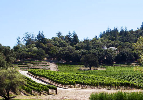 medlock-ames-vines.jpg