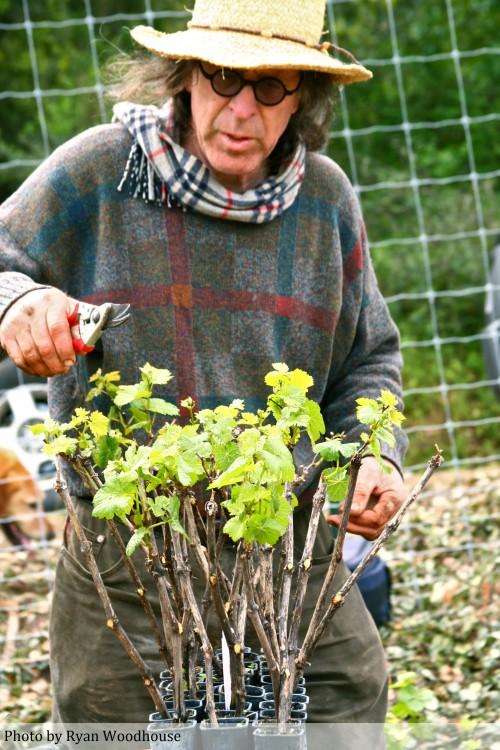 Randall-Grahm-pruning-e1273556223974.jpg