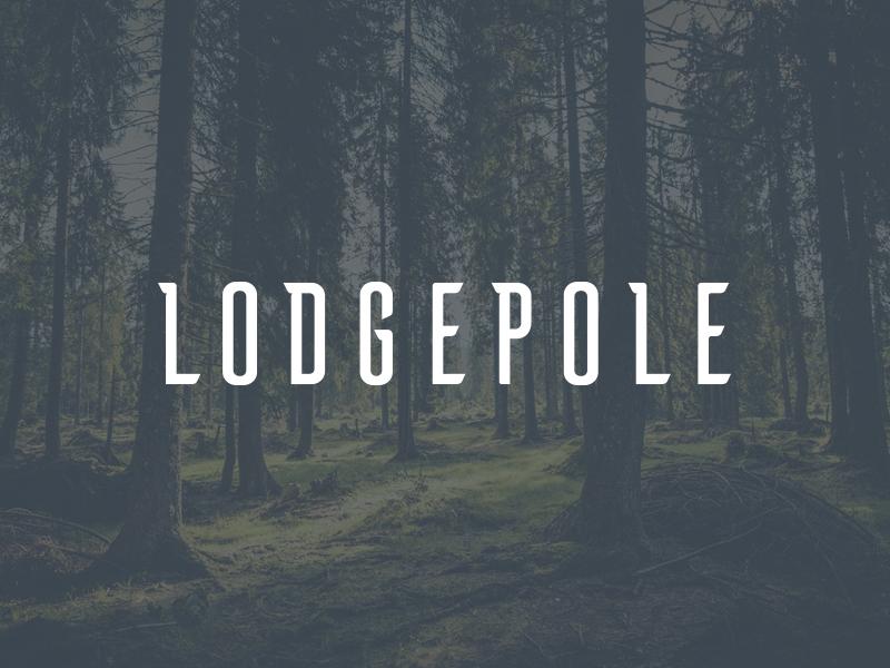 lodgepole.jpg