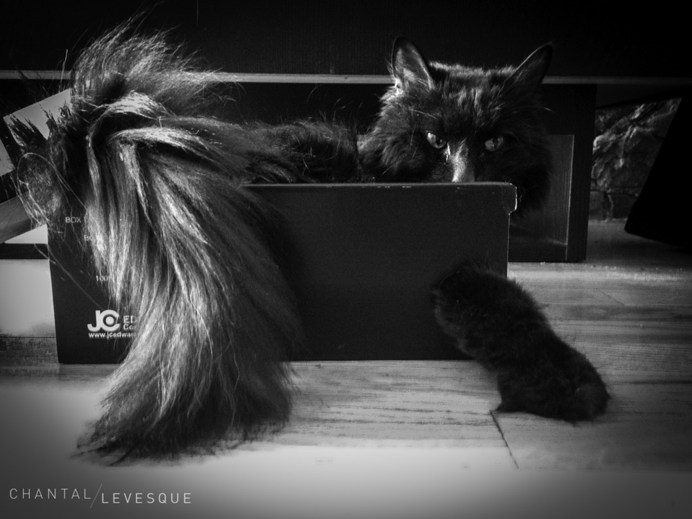 Diablo last September. He LOVED his box. I got some new boots at the end of summer and minou claimed ownership of the box. For months he spent a good part of his time in it. He fit snug and used the hole to stretch out his paw (the paw hole)