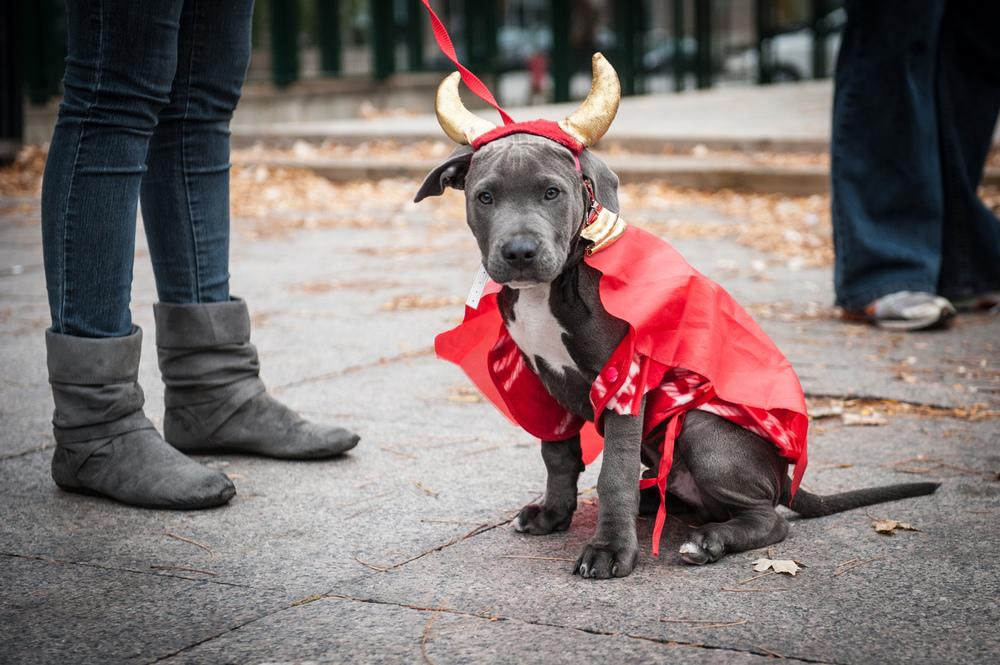 dogs-halloween-7993.jpg