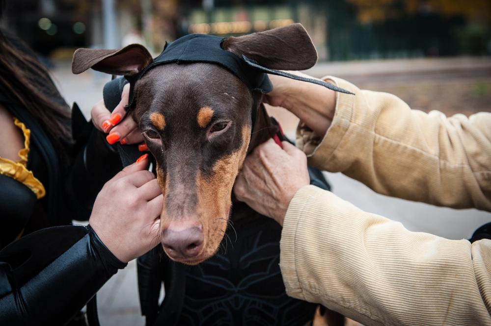 dogs-halloween-8105.jpg