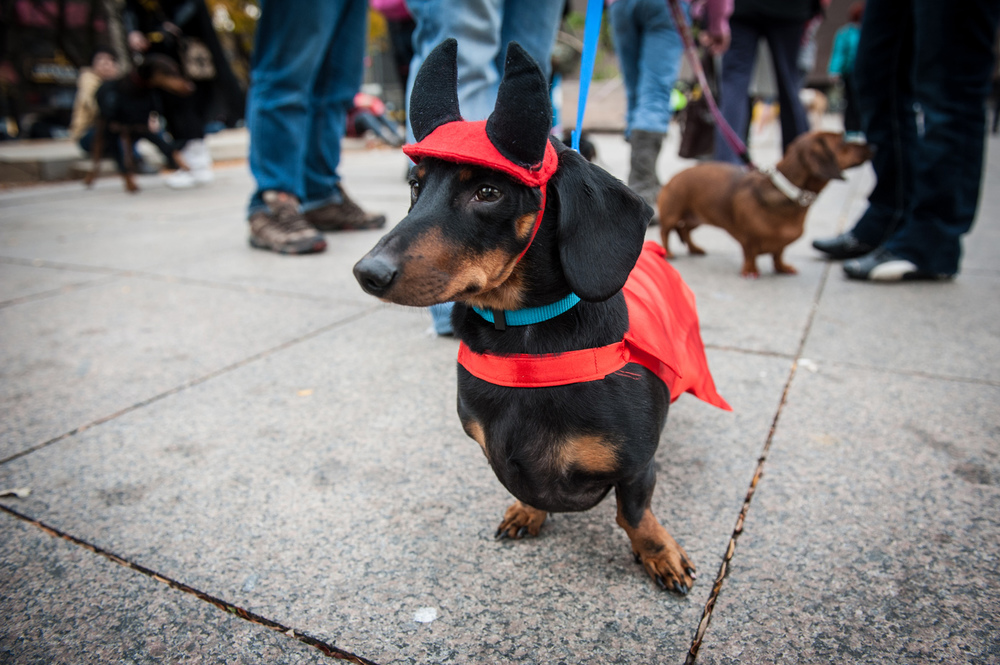 dogs-halloween-8112.jpg