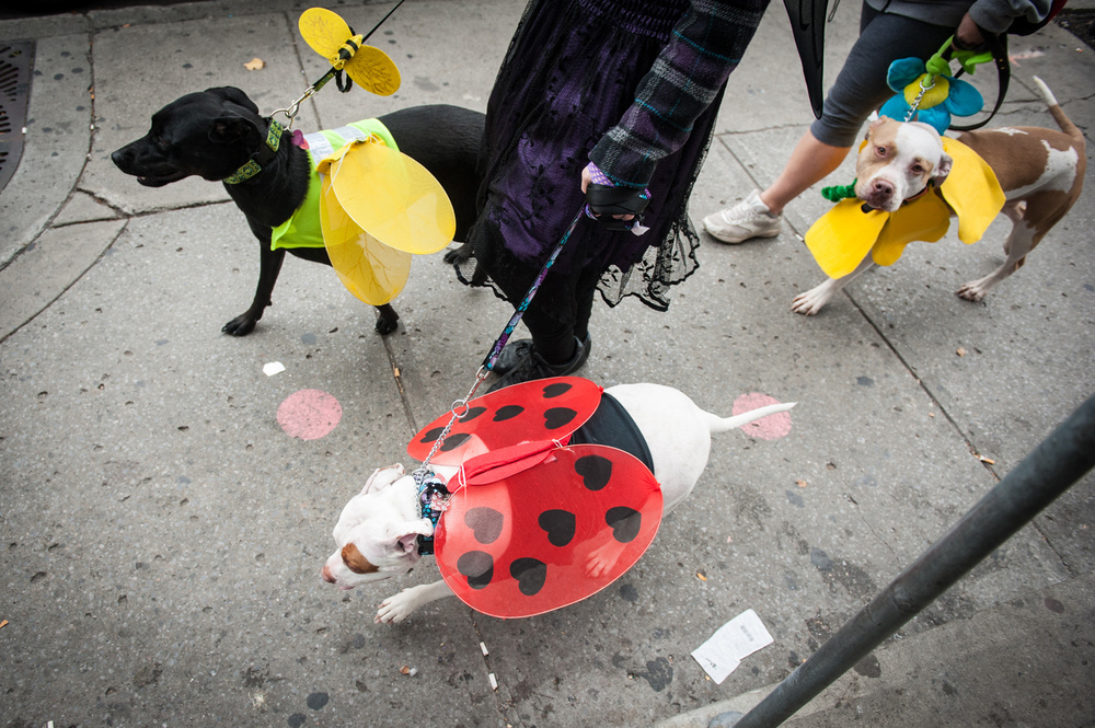 dogs-halloween-8179.jpg